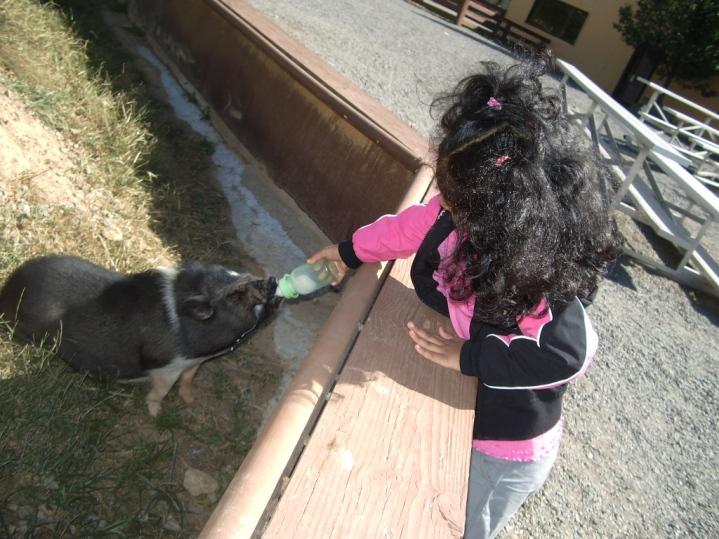 feeding_piggy.jpg